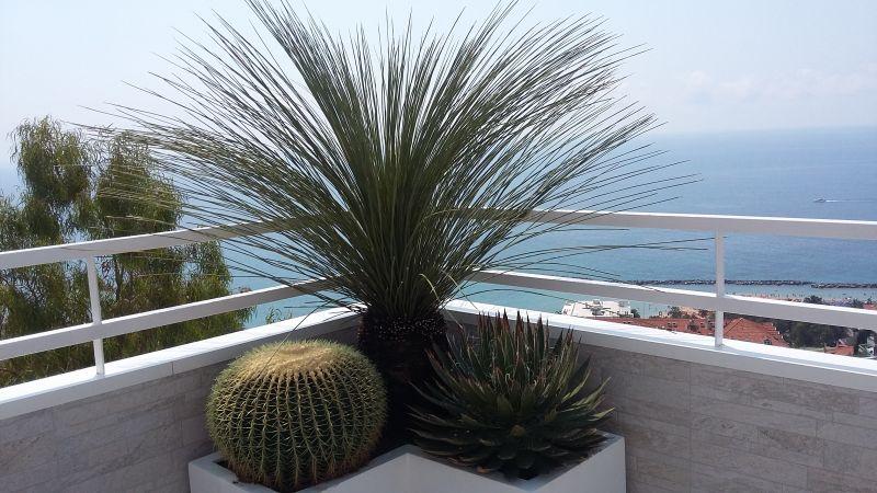 offerta realizzazione terrazzi giardini sanremo - cactus succulente da collezione sanremo