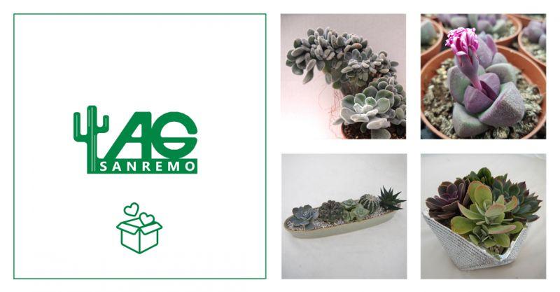 offerta vendita pianta grassa regalo - promozione vivaio piante grasse sanremo