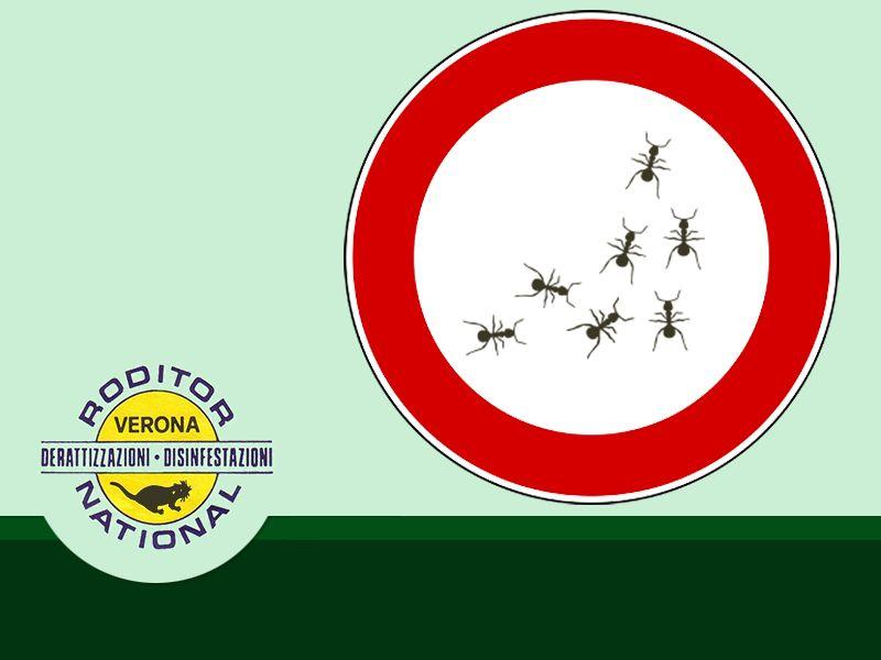 Offerta Disinfezione Ambienti Pubblici - Bonifica Ambienti Privati - Mantova - Roditor National