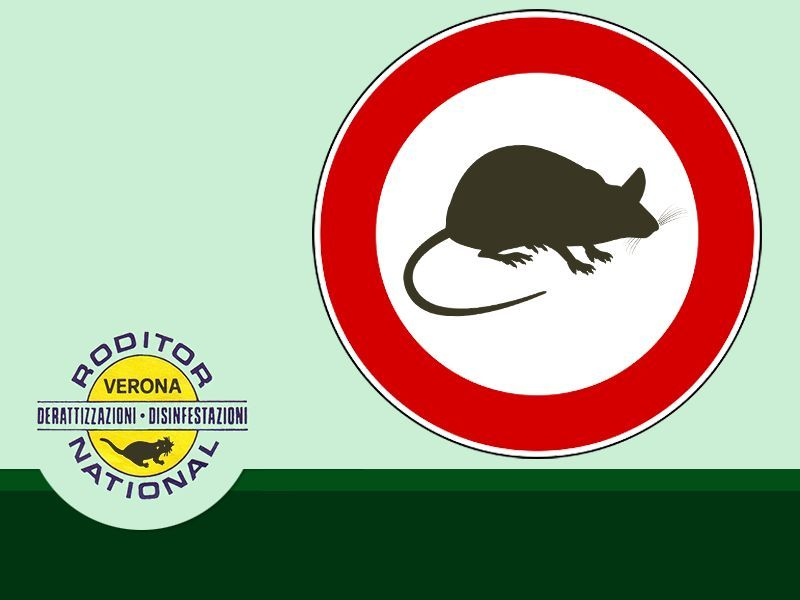 OFFERTA DISINFEZIONE CONTRO RODITORI - BONIFICA CONTRO RODITORI RODITOR NATIONAL