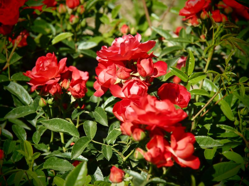 vivaio con vendita piante da giardino e ornamentali a sommacampagna provincia di verona