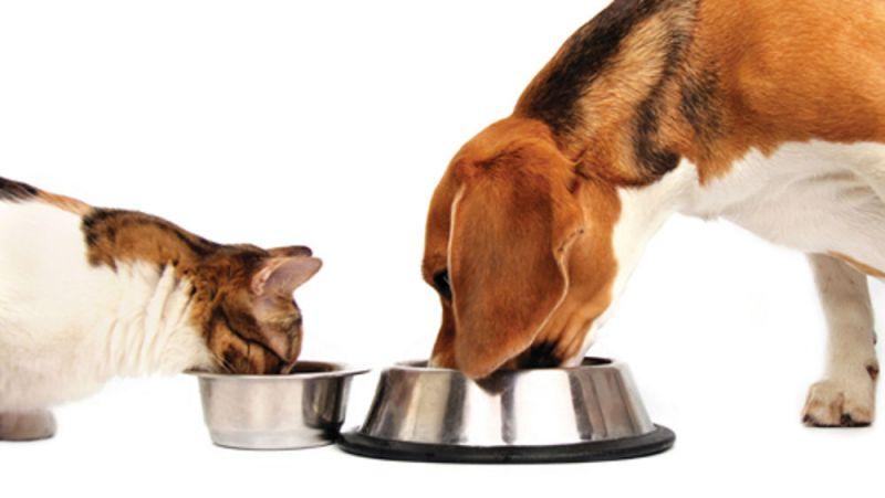 Offerta prodotti zootecnici - Occasione alimenti per animali domestici e da cortile vicenza