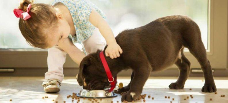 Offerta alimenti per animali-Promozione negozio cibo mangimi crocchette per animali Verona