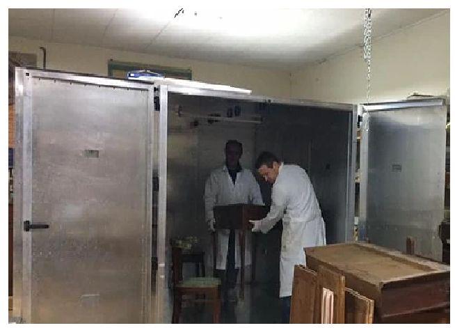 Offerta trattamento antitarlo a microonde - trattamento antiacaro Città di Castello - ReD
