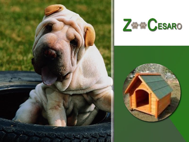 offerta vendita cucce per cani terni - promozione cucce in legno ventilate terni
