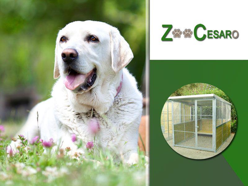 offerta vendita box per cani terni - promozione box strutture modulari cani terni
