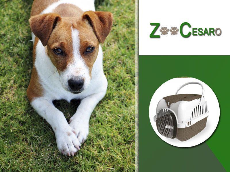 offerta vendita trasportini per cani gatti terni - promozione trasportini gabbie animali terni