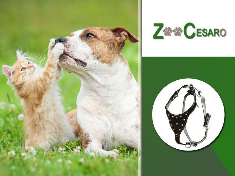 offerta vendita pettorine per cani terni - promozione pettorina in cuoio terni