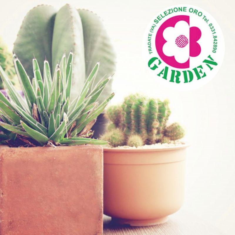 offerta piante grasse miste-promozione piante grasse in vasetto