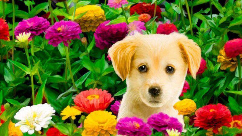 Promozione-offerta Universe Pets per animali da Erbolandia