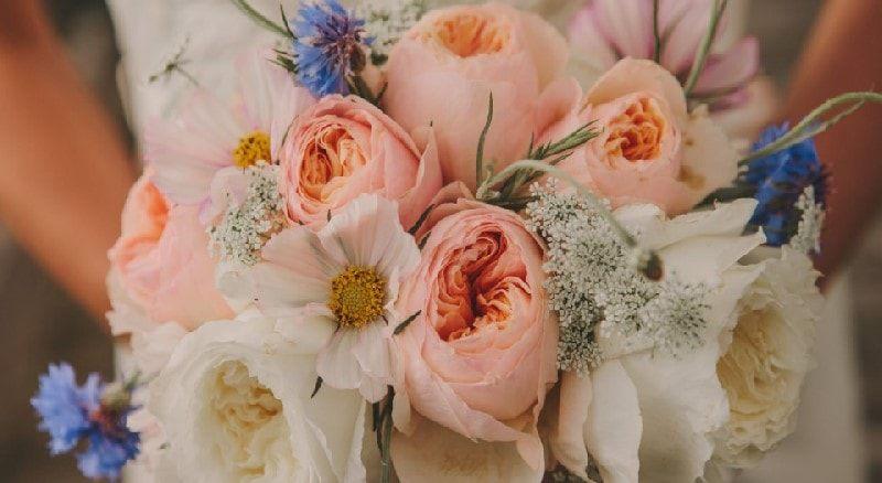 offerta consegna a domicilio fiori piante - occasione vendita piante da interno ed esterno