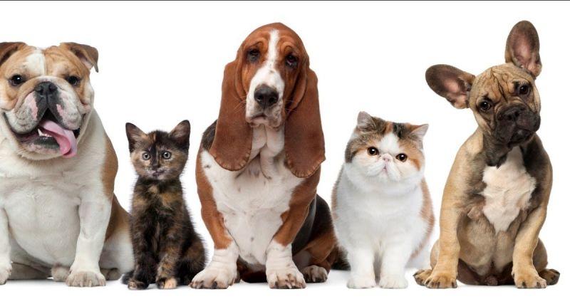 offerta assistenza Ricovero Veterinario - occasione Medicina d'Urgenza veterinaria trieste