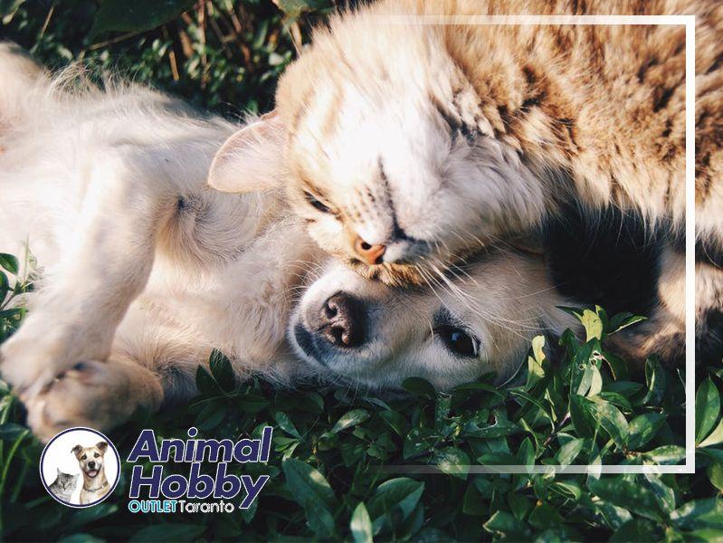Offerta Vendita cibo cani e gatti - Promozione Servizio Vendita Articoli Animali Domestici