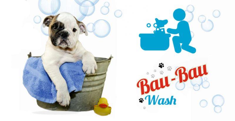 offerta toelettatura professionale con operatore - promozione servizio taglio tosatura cane