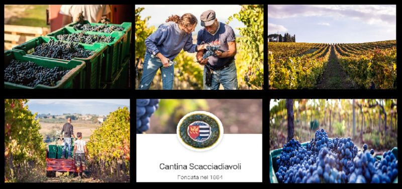 Scacciadiavoli wineries in Umbria  - OFFER SALE PRODUCTION ITALIAN WINE UMBRIA MONTEFALCO
