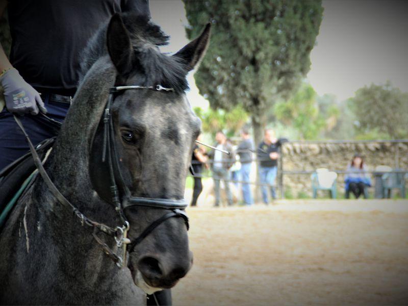 Offerta corsi di equitazione e dressage - Promozione passeggiate a cavallo Puglia