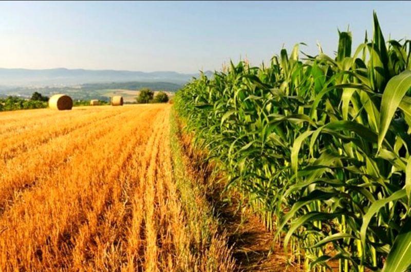 Produzione prodotti bio+vendita prodotti bio+salerno