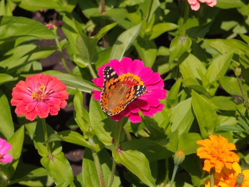 offerta arbusti da fiore per aiuole e balconi viareggio-arbusti da fiore aiuola e giardino