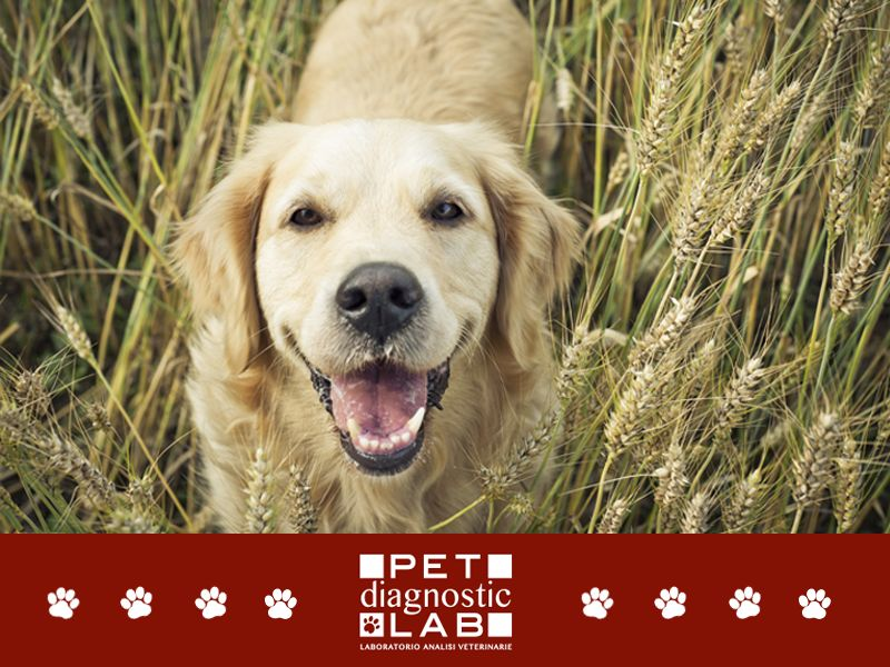 offerta prevenzione leishmaniosi canina - esame pcr leishmaniosi cane