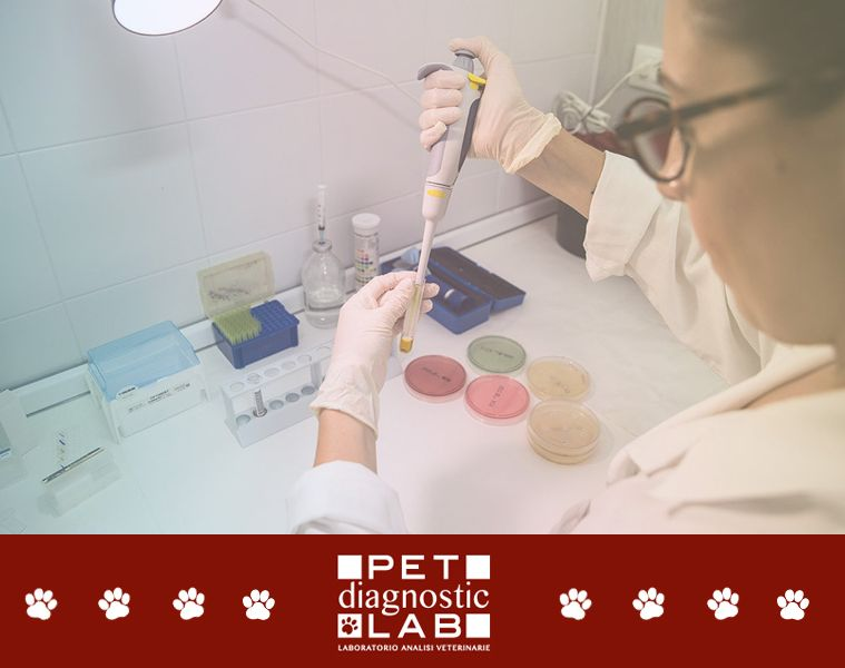 offerta laboratorio analisi veterinarie - ritiro campioni per esami veterinari