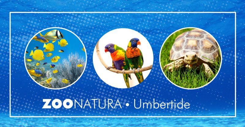 offerta prodotti accessori acquario umbertide - promozion rettilari gabbiette uccelli roditori