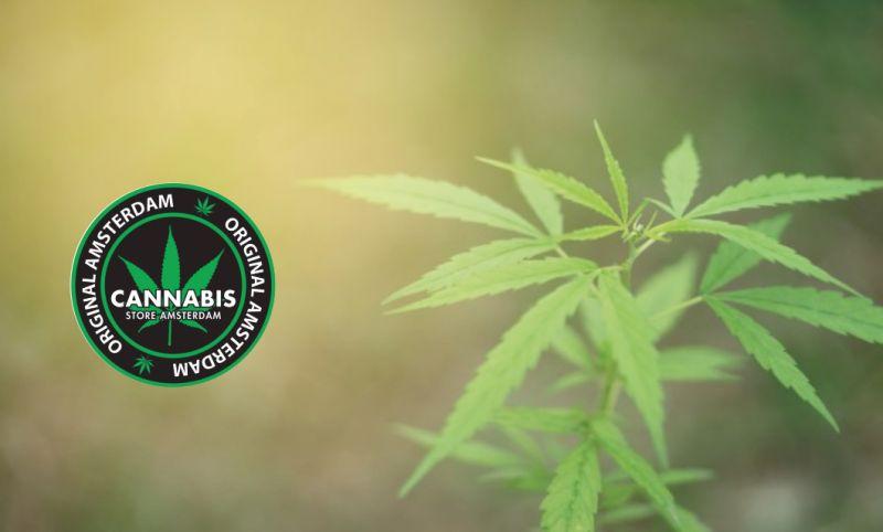 offerta cannabis light terapeutica-promozione cannabis legale