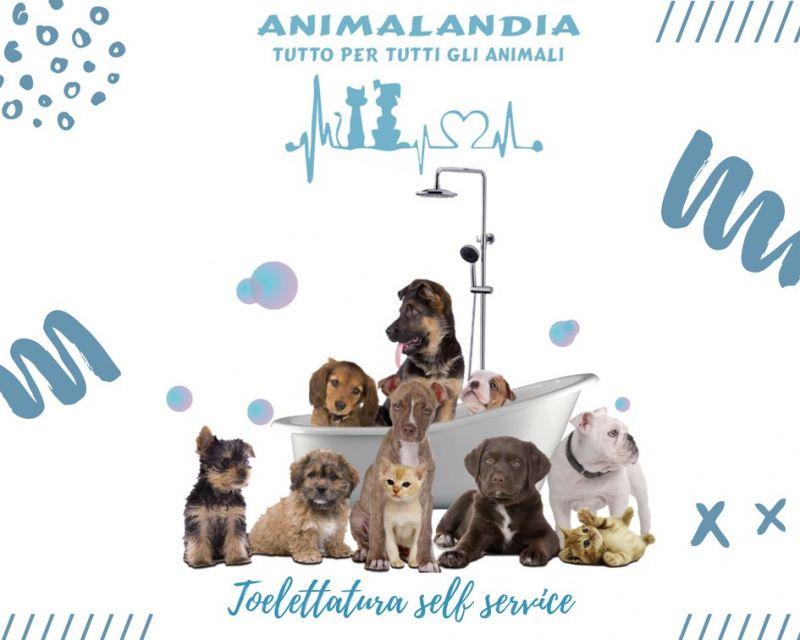 ANIMALANDIA SAN GAVINO - TOELETTATURA PER CANI E GATTI SELF SERVICE