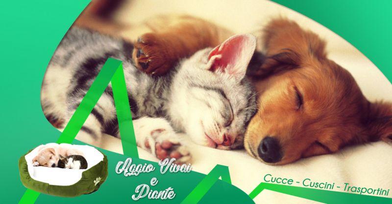 Offerta vendita cucce trasportini e cuscini per cani e gatti a Treviso - Aggio Vivai