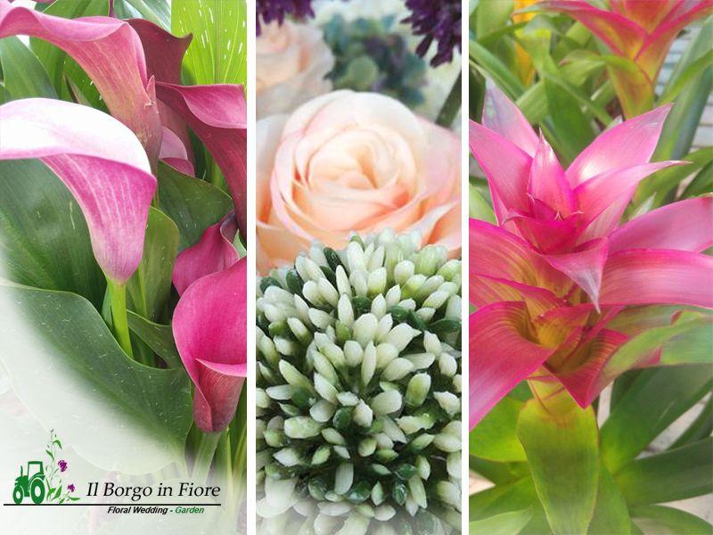 Vendita piante - Il Borgo in Fiore