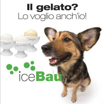 gelato per cani siena 101 market