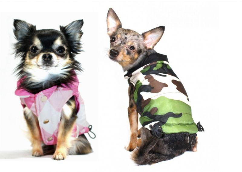 offerta promozione piumino per cani poggibonsi