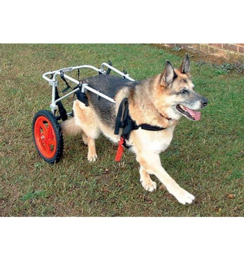 Promozione carrelo cani disabili - Offerta sedie a rotelle cani disabili - Poggibonsi