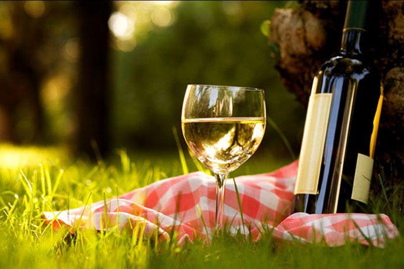 offerta vendita vino doc friuli venezia giulia - occasione vendita vini sfusi e grappe trieste