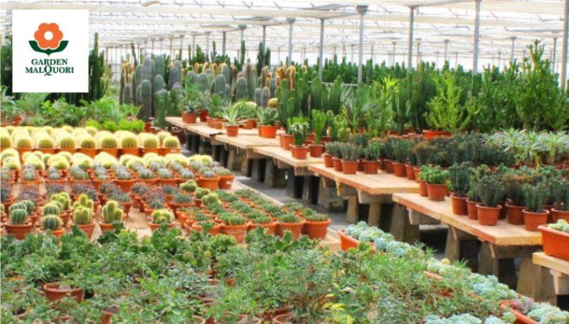 Promozione vendita piante e fiori Poggibonsi - Offerta fiori e piante Siena