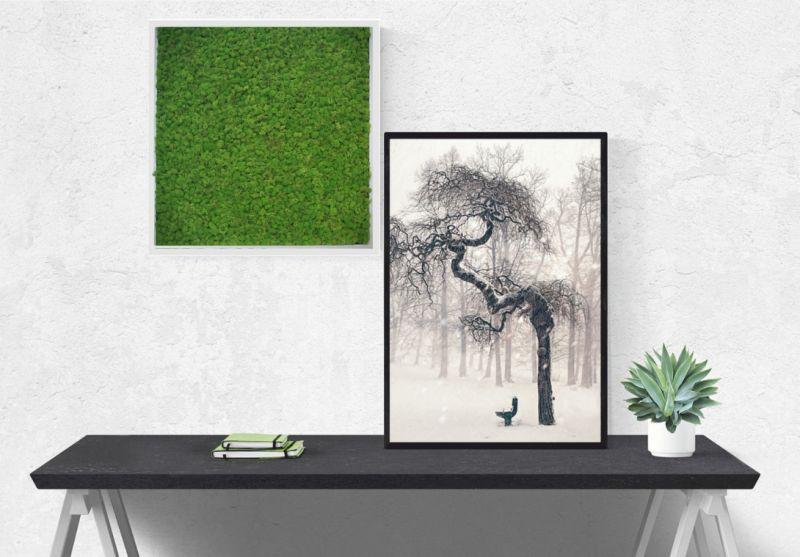 offerta giardino stabilizzato con cornice bianca-promozione giardino pensile licheni