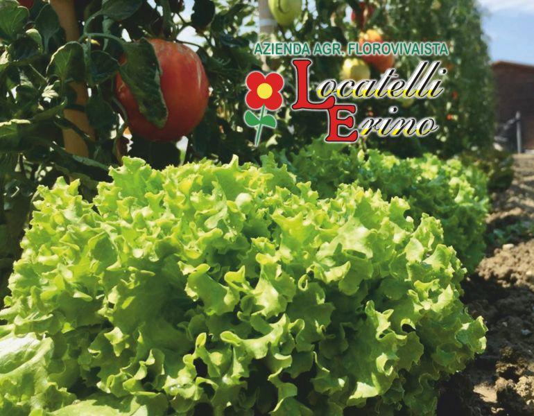 offerta piante da orto-promozione sementi da orto
