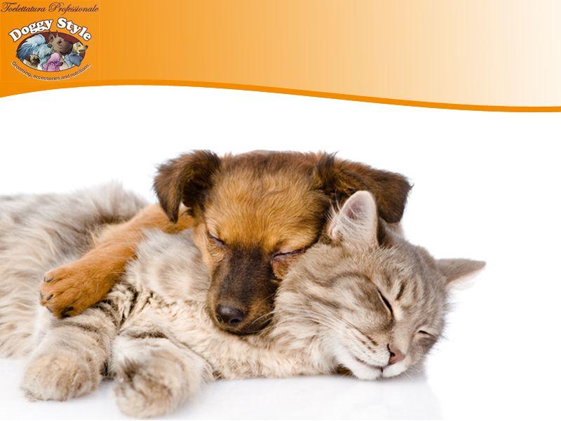 Offerta Vendita Prodotti Cani - Promozione Vendita Gatti - Doggy's Style