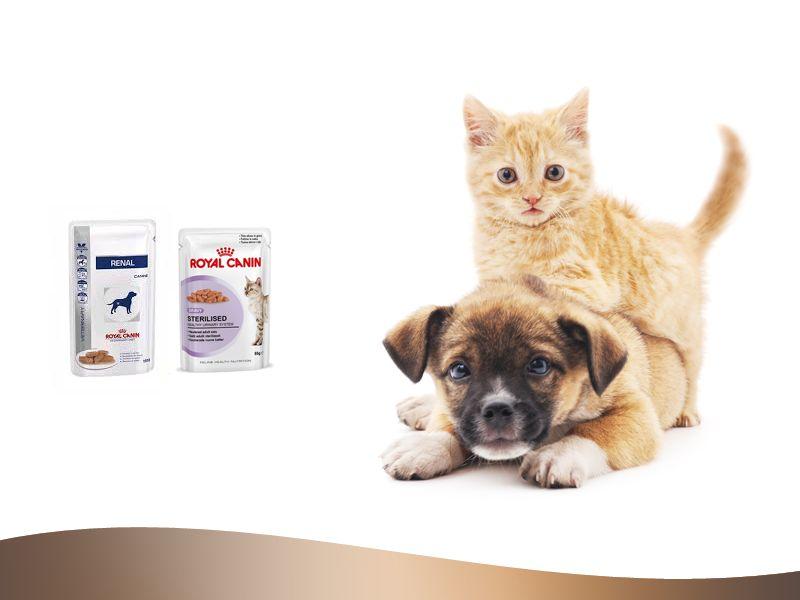 promozione royal canin offerta bustine rende