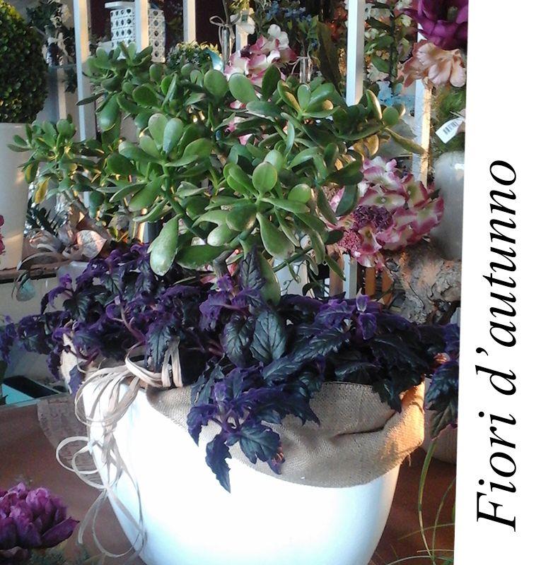 promozione occasione fiori dautunno bergamo