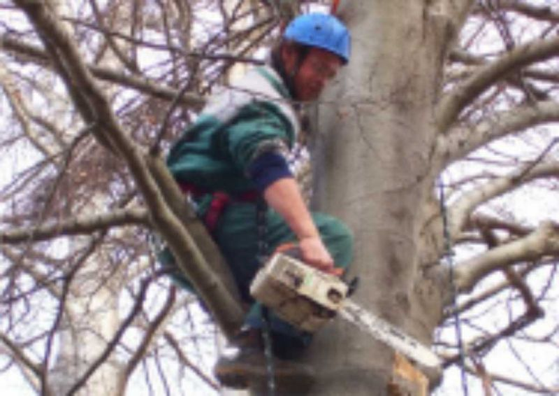potatura alberi piante e palme con tree climbing