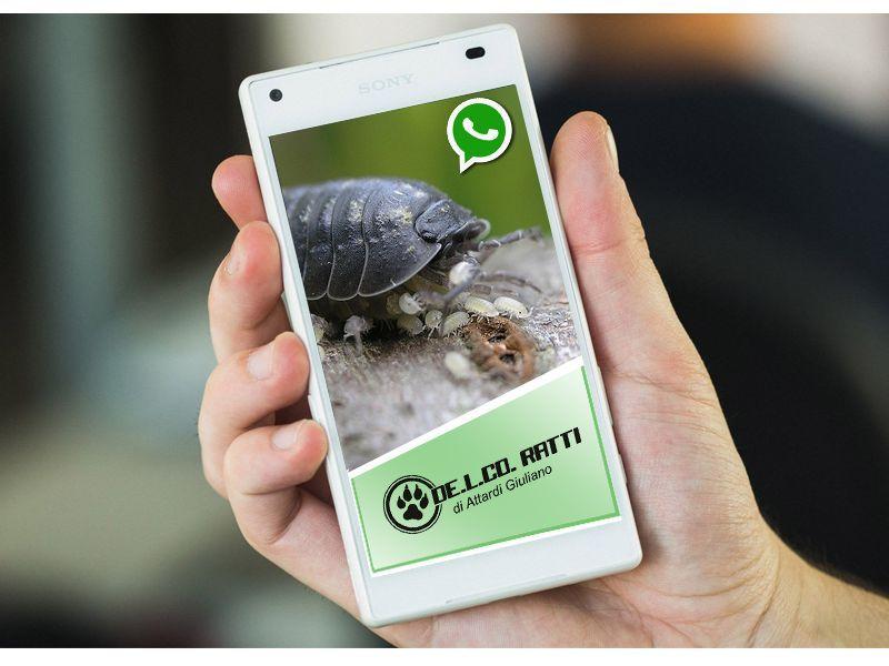 riconoscere gli insetti con whatsapp de l co ratti