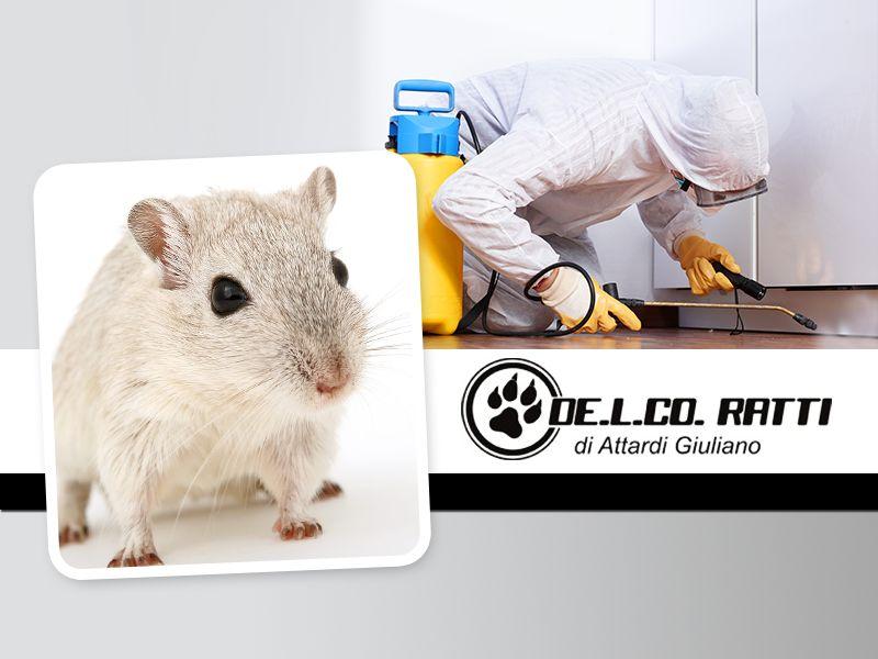 Offerta Disinfestazione Rende - Promozione Derattizzazione Rende - De.l.co. Ratti