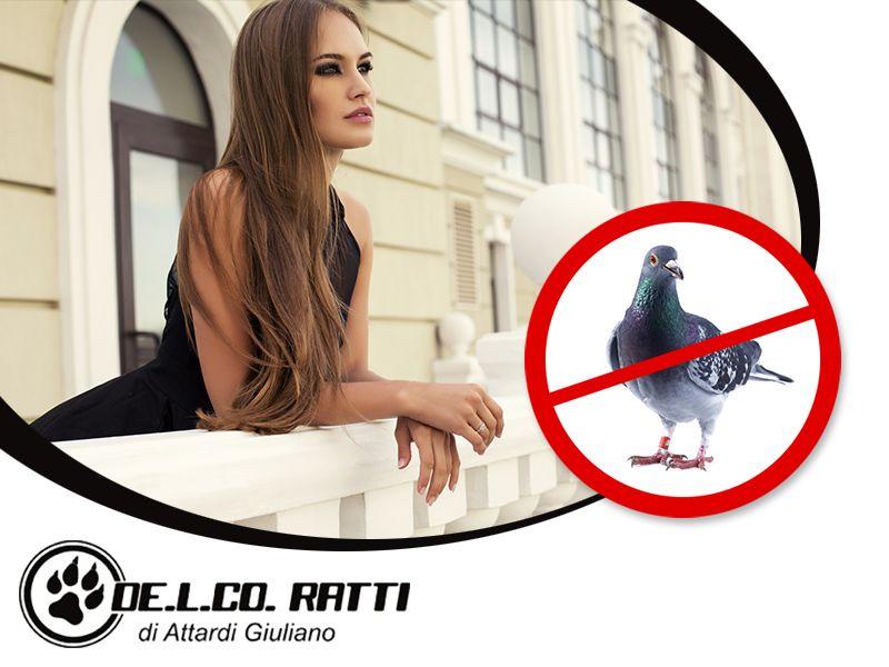 Offerta Allontanamento Volatili - Promozione Allontanamento Piccioni - De.l.co. Ratti