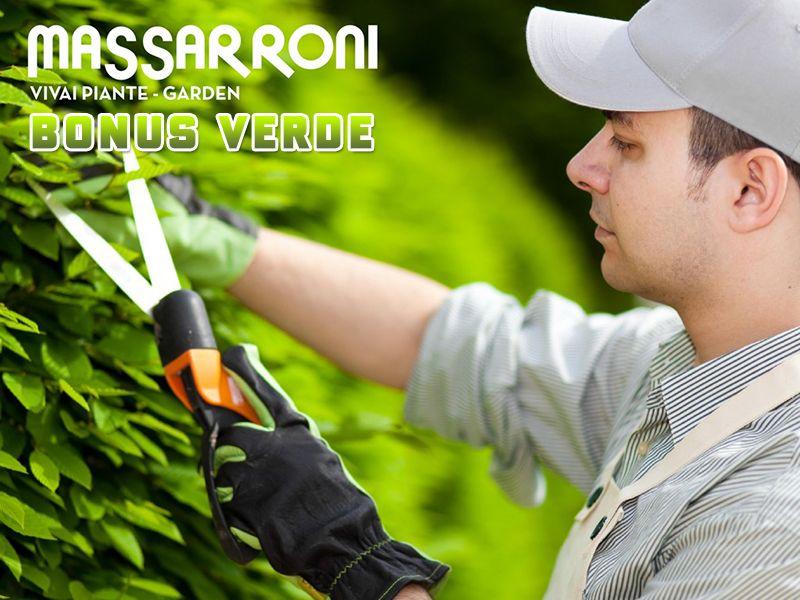 Offerta Bonus Verde 2018 - Promozione Incentivi Fiscali Verde - Vivai Massarroni