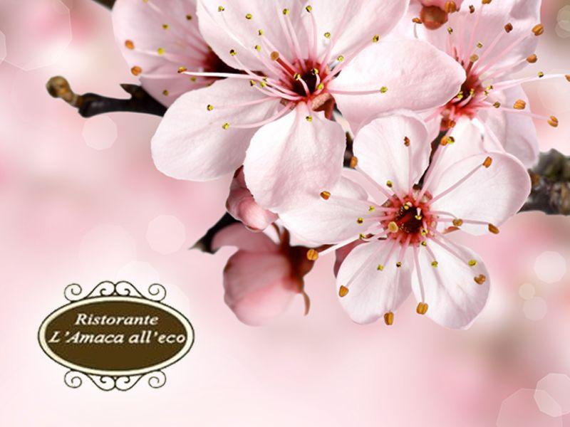 offerta pranzo di primavera-promozione pranzo lago piediluco-ristorante amaca all'eco piediluco