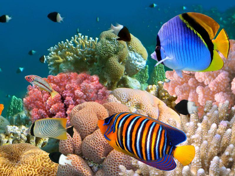 scopri i nuovi esemplari di pesci tropicali
