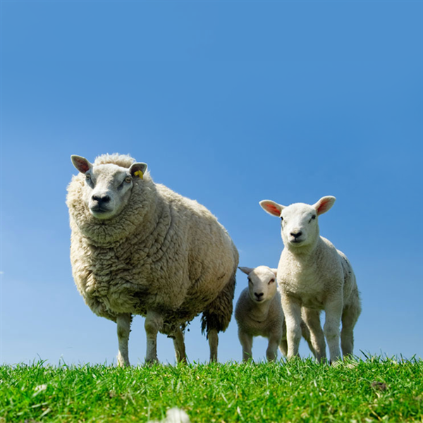 fontana f lli propone soluzioni tecnologiche per lallevamento di ovini e caprini leggi di piu