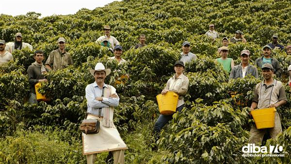 Colombia, la siccità minaccia uno dei migliori caffè al mondo - Diba 70 distributori professionali, rassegna stampa
