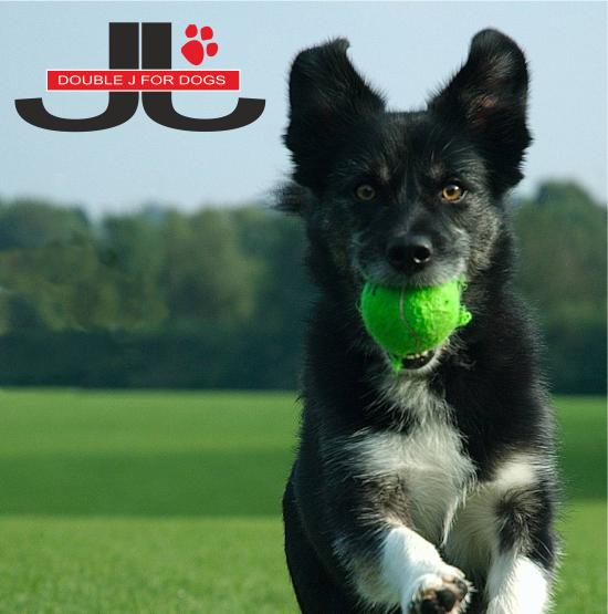 double j for dog gli specialisti delleducazione e della riabilitazione per il tuo cane scopri di piu