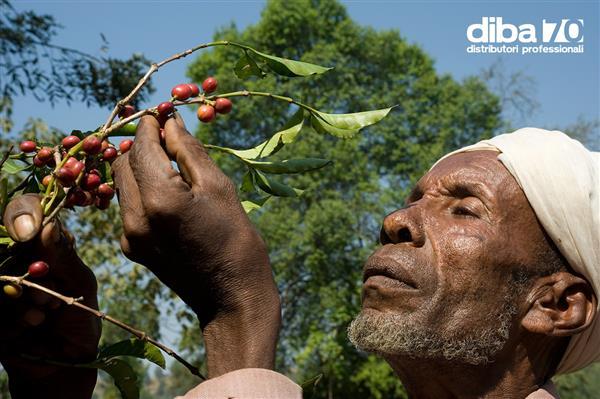 caffe in tanzania e record diba 70 distributori professionali rassegna stampa